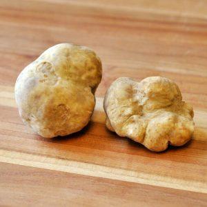 white truffles mushroom
