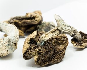 shrooms for sale